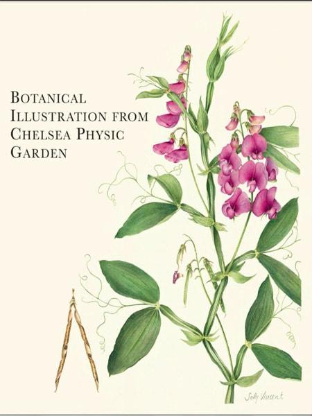 Botantical Illustration From Chelsea Physic Garden - Cây xanh cảnh quan