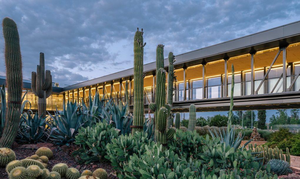 Desert city – Ngôi nhà tuyệt vời cho 400 loài xương rồng