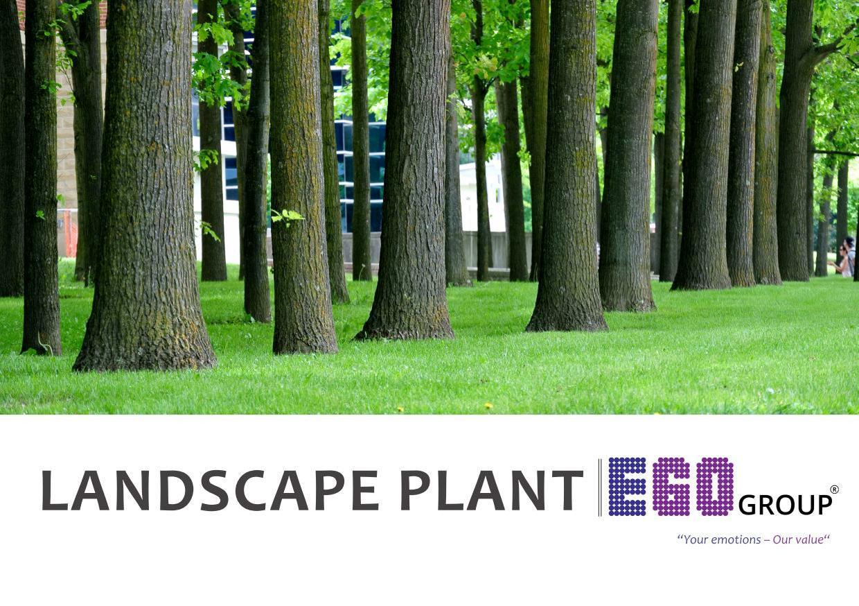 Ego Landscape Plant-20181