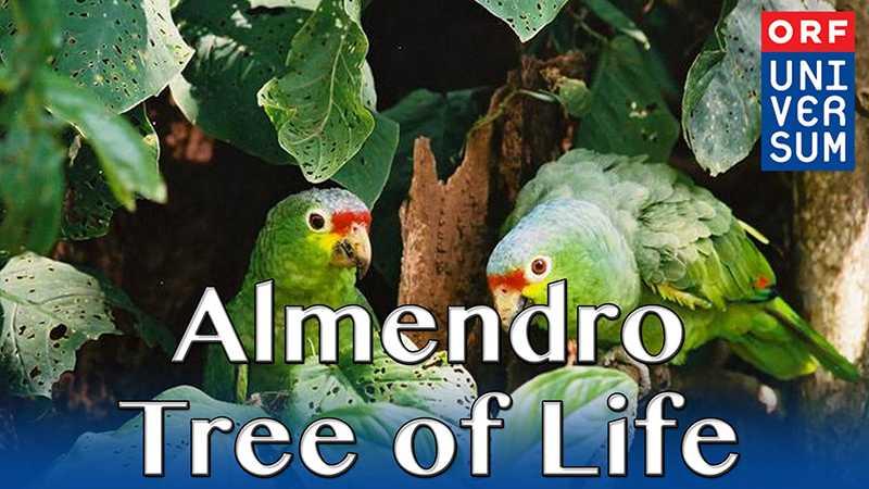 Almendro Tree of Life – The Secrets of Nature