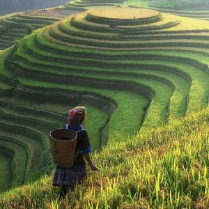 Fields Breathe by Beauty / Vẻ đẹp cây cỏ
