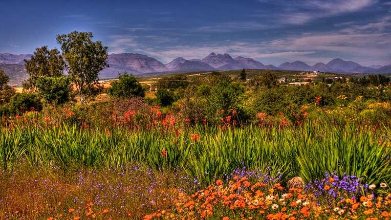 Namaqualand – Africa's Desert Garden – The Secrets of Nature / Namaqualand khu vườn giữa sa mạc châu Phi – Bí mật tự nhiên
