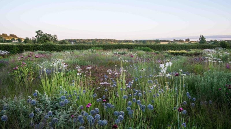 thiết kế cảnh quan sân vườn tự nhiên