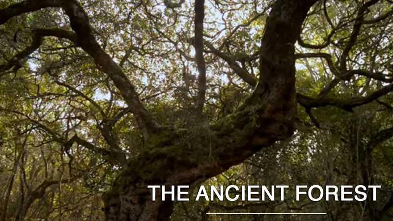 The Ancient Forest – Platbos / Khu rừng cổ Platbos