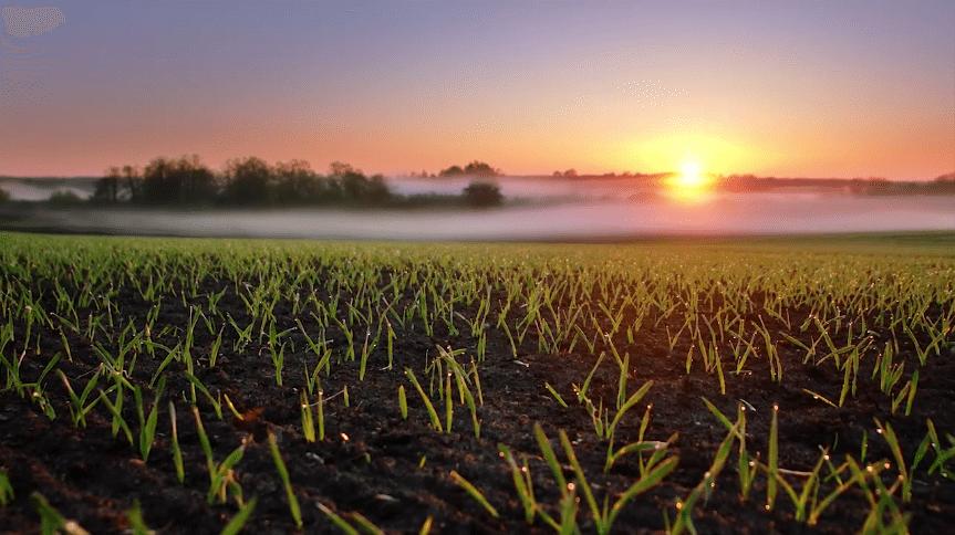 Twilight Magic – Botanics, Spring Loaded / Chạng vạng vẻ đẹp đồng cỏ mùa xuân