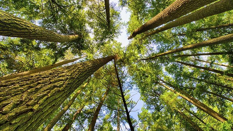 A Forest Year Timelapse / Cảnh quan khu rừng trong 1 năm