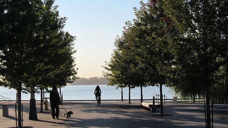 Three Design Issues that Impact Long Term Health of Urban Trees / Ba yếu tố thiết kế cảnh quan có tác động đến sức sống của cây xanh độ