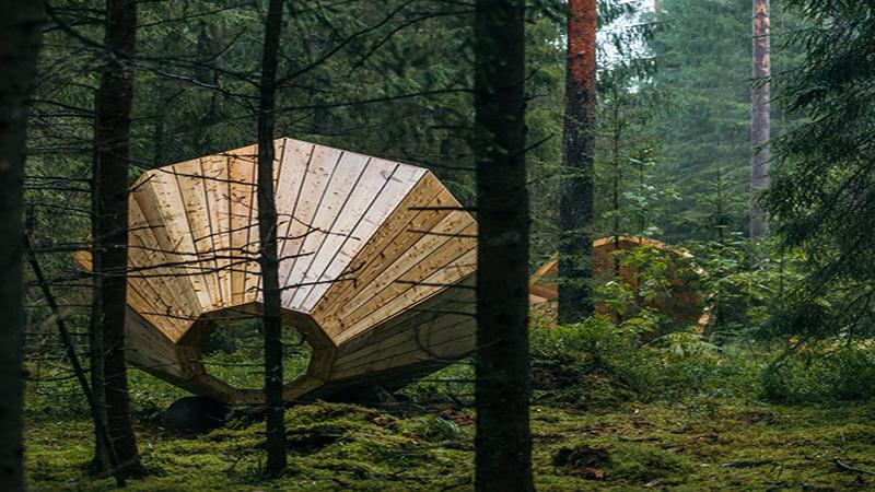 Lost in the forest- Art installation / Tác phẩm sắp đặt: Lạc giữa khu rừng