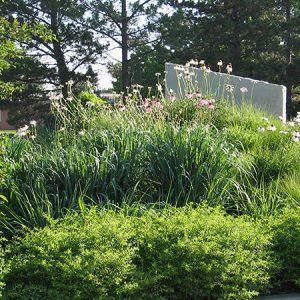 Planting Design Lecture / Thiết kế cây xanh