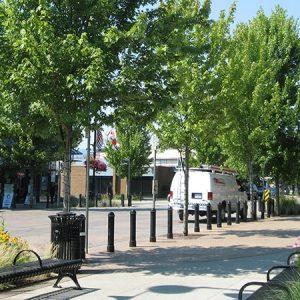 Free, research-driven tree and soil details/specifications from the Urban Tree Foundation / Nghiên cứu về thổ nhưỡng và hạ tầng đô thị của Tổ chức Lâm nghiệp đô thị