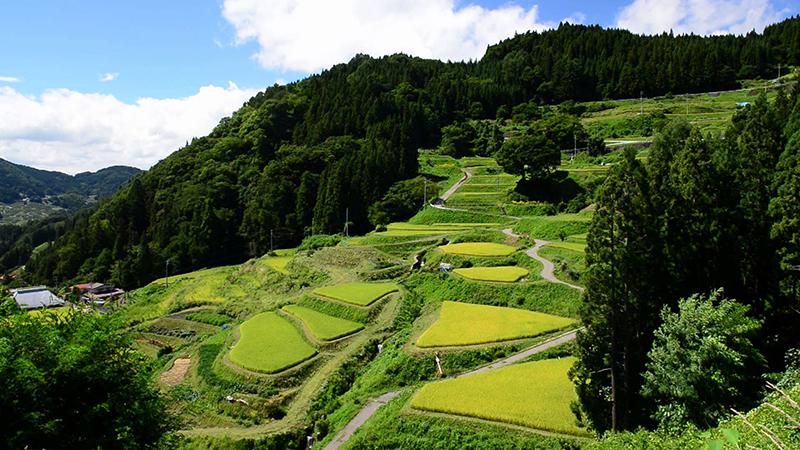 Satoyama-Taiwan's Tenuous Dance with Nature