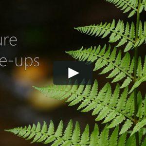 Nature Close-ups (4K)