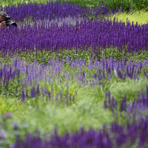 Piet Oudolf – Paradise Within Arm's Reach / Khu vườn của Piet Oudolf – Thiên đường trên mặt đất