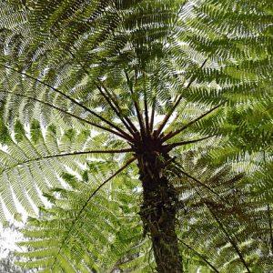 Tree Ferns – a Beginner's Guide / Hướng dẫn trồng và chăm sóc Dương xỉ